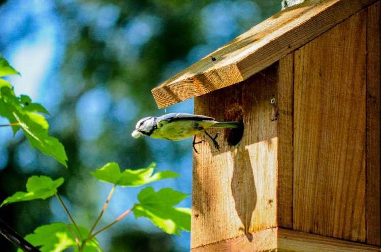 Timber Birdhouse