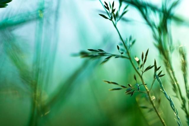 Grass in Soft Focus