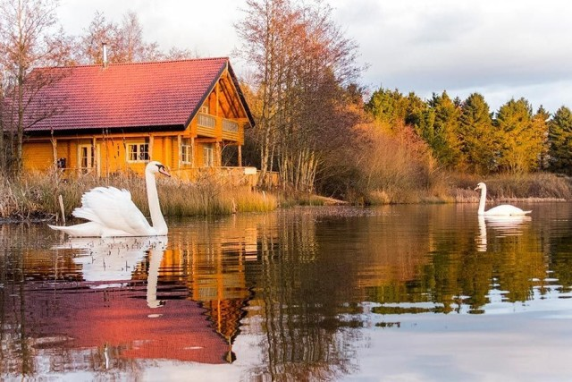 log house on lake with two swans