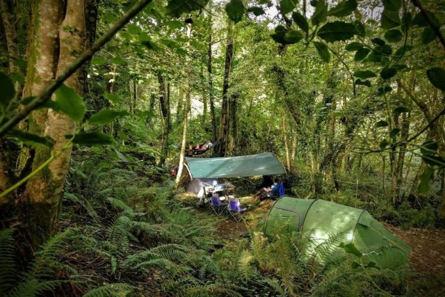 tent in dense forest