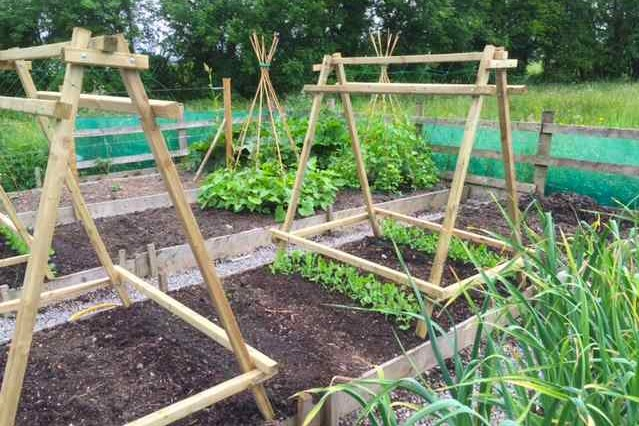 Pea and Bean Support Frame from QuickCrop