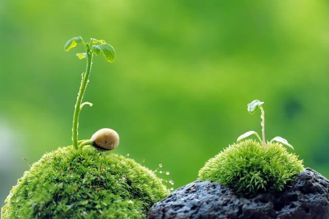 two seedlings growing on a rock