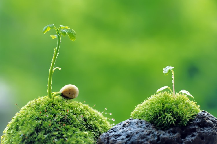 two seedlings growing on a rock