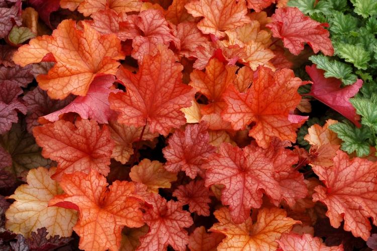 orange leaved plant