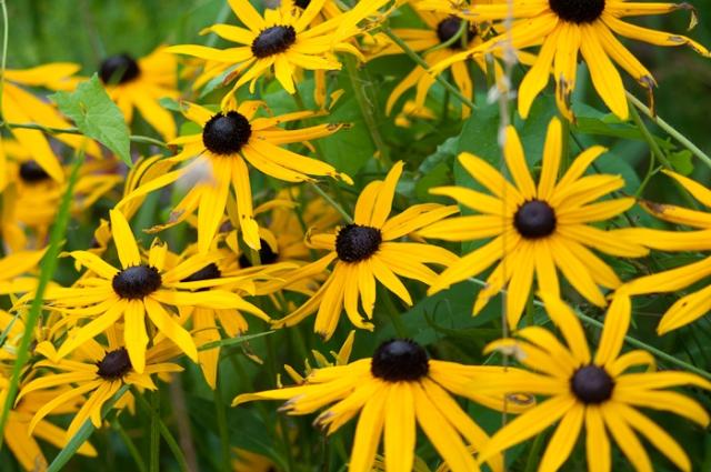 yellow daisy like flowers