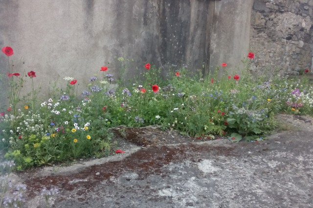 wild flowers growing in a concrete lot