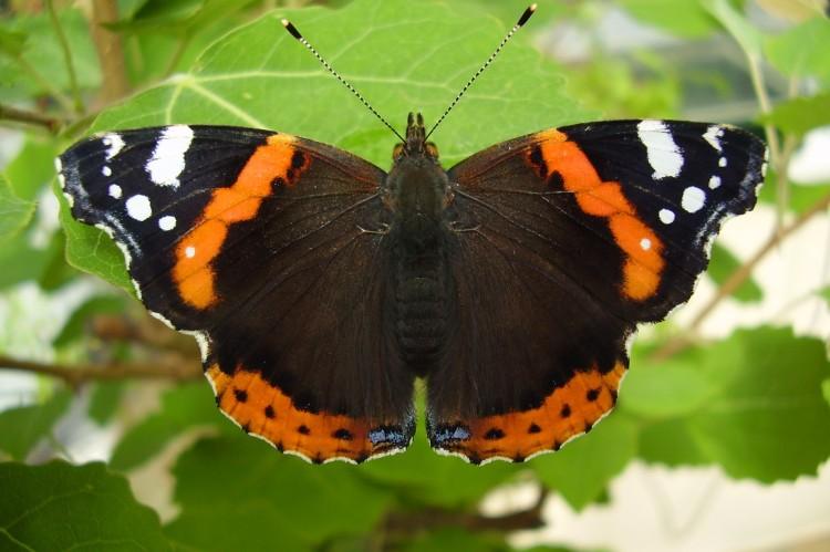 Biodiversity Ireland