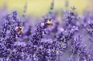 organic biodiverse gardening