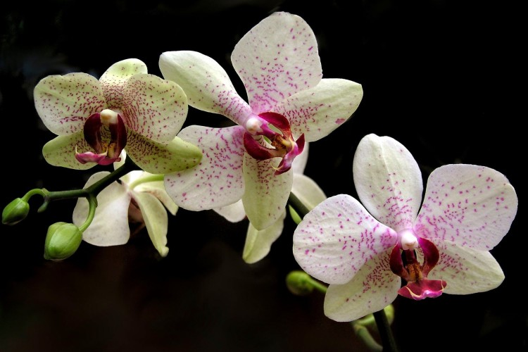 getting orchids to flower